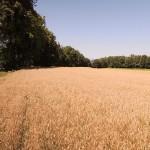 polje